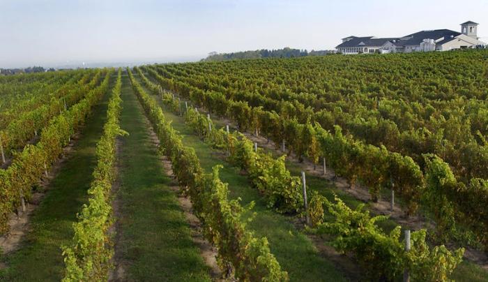 Casa Larga Vineyards