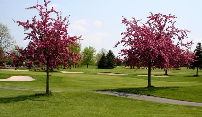 Trees along the course at CenterPointe Country Club