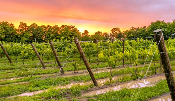 Colloca Estate Winery