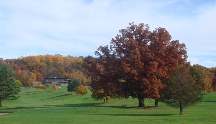 Dinsmore golf fall