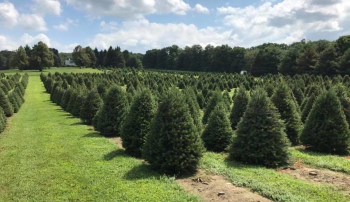 Evergreen Farms Oct 2018