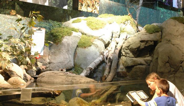 Exhibit at The Wild Center