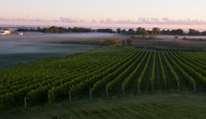 Arrowhead Spring Vineyards - Photo provided by Arrowhead Spring Vineyards for Niagara Wine Trail USA