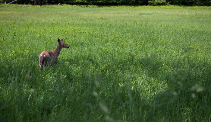 Deer at Mohonk Preserve