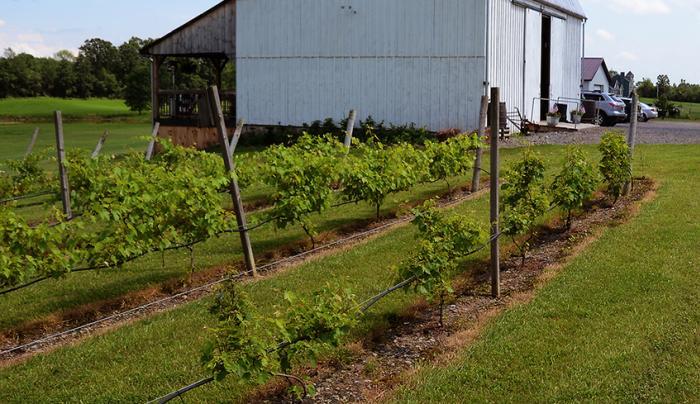 Izzos White Barn Winery