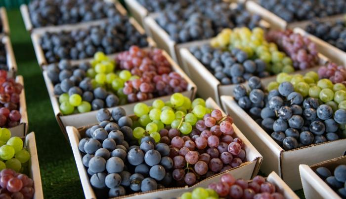 Freshly picked grapes in bins at Joseph's Wayside Market