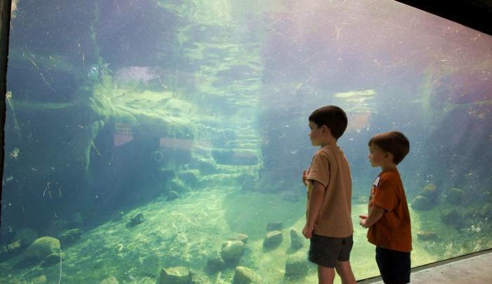 Kids watching Penguins