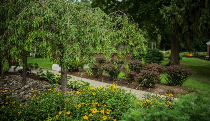 Central Park- Rose Garden