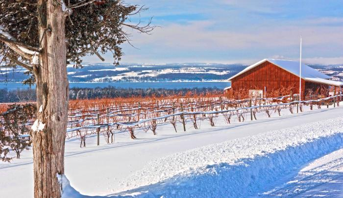 Long Point Winery; Photo Credit Kristian Reynolds