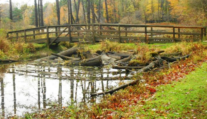 Reinstein Woods Nature Preserve