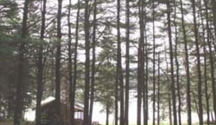 Sacandaga Pines