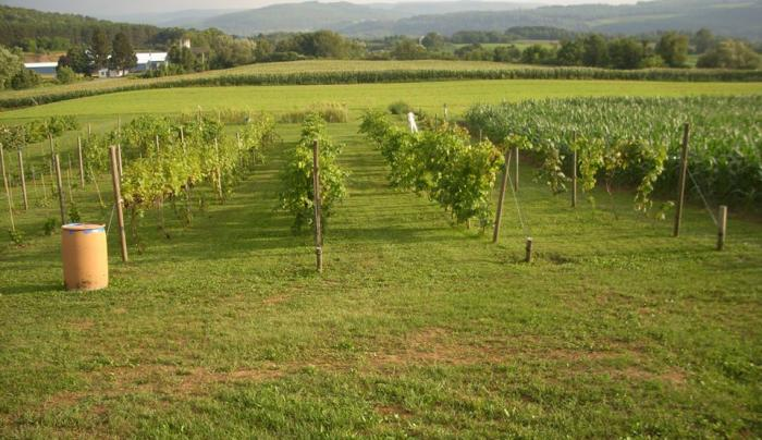 Savor Winery