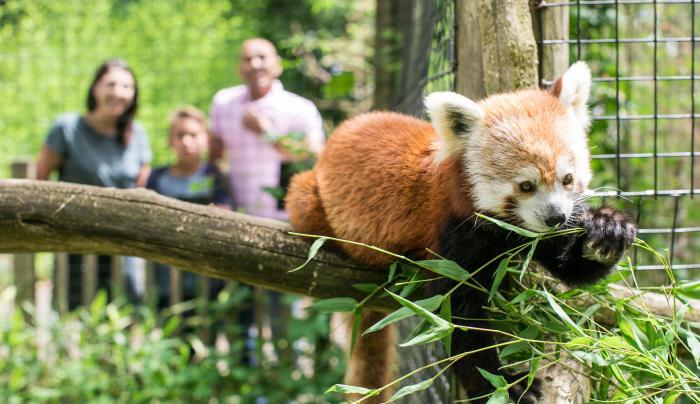 Trevor Zoo