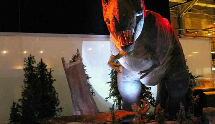 MOST - Tyrannosaurus Rex - Photo Courtesy of Onondaga County