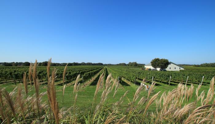 Bedell Cellars vineyard