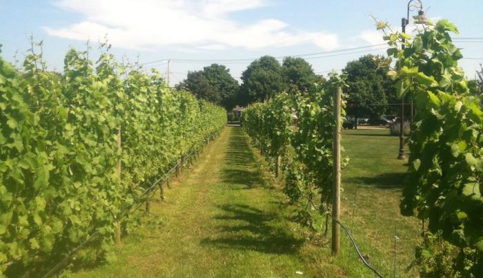 Wine Country ( Escorted Tour)