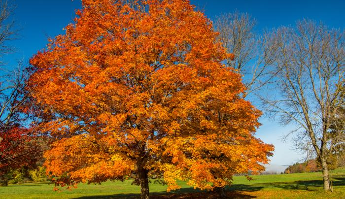 Allegany State Park-Quaker Area
