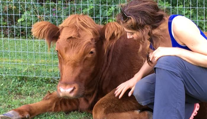 Connect with our Cows - Cow cuddling
