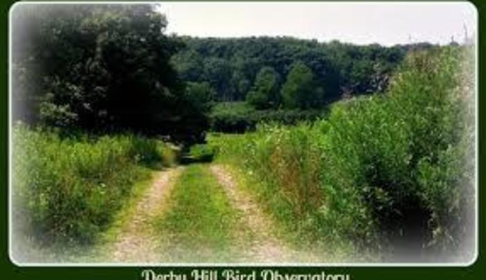 derby hill