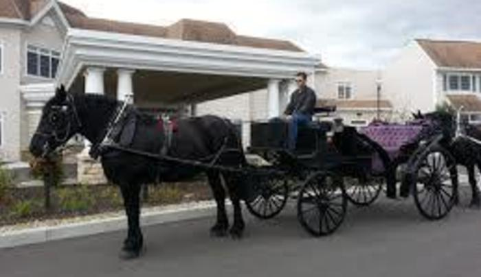 Saratoga Horse and Carriage Co.