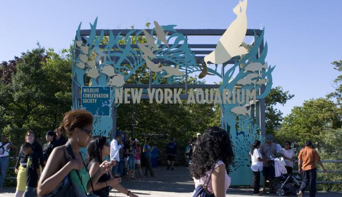 New York Aquarium_ Photo by bamiadedoyin