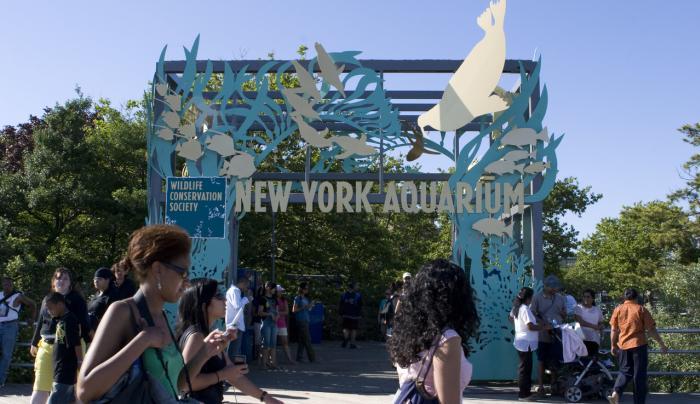 New York Aquarium_ Photo by bamiadedoyin