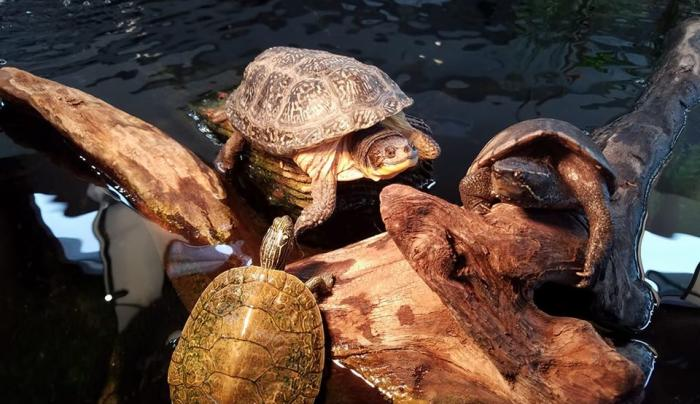 Nicandri Turtle exhibit