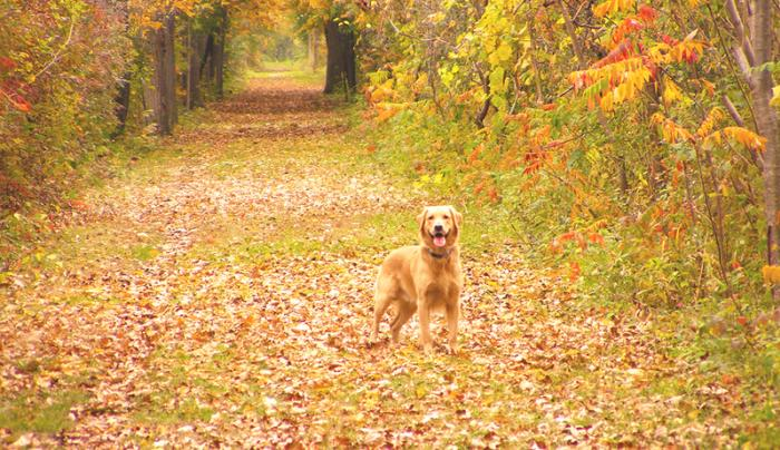 A dog poses for a photo while on a hike on the Ontario Pathways Trails