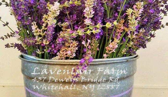 32 different varieties of lavender