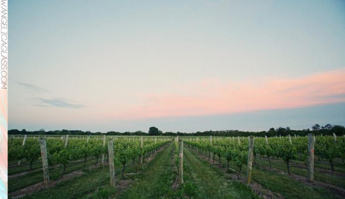 Sparkling Pointe's vines at dusk