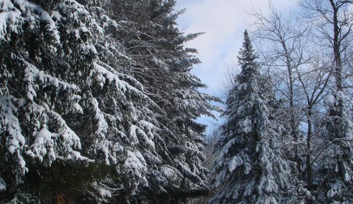 Dyken in winter.jpg