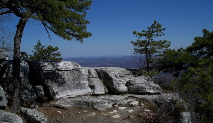 minnewaska tree.jpg