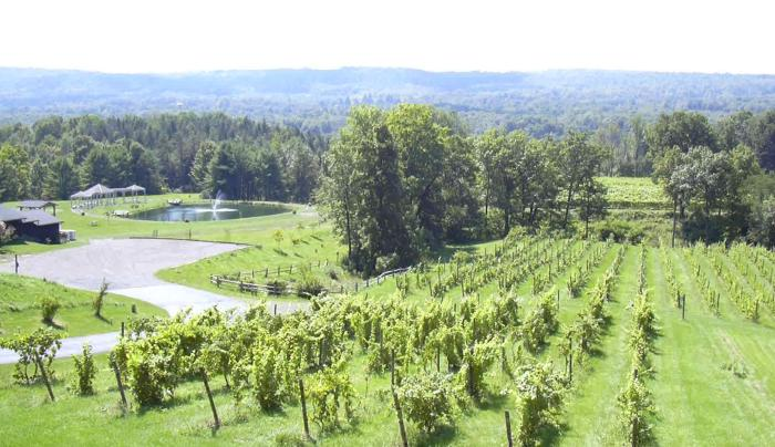 Vineyard with pond at Six Mile Creek.TIF