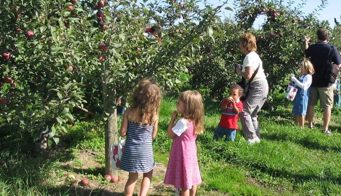 apple picking sqJPG.jpg