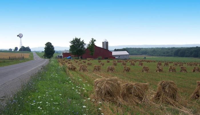 Amish oat field copy.jpg