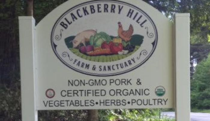 Blackberry Hill Farm and Sanctuary