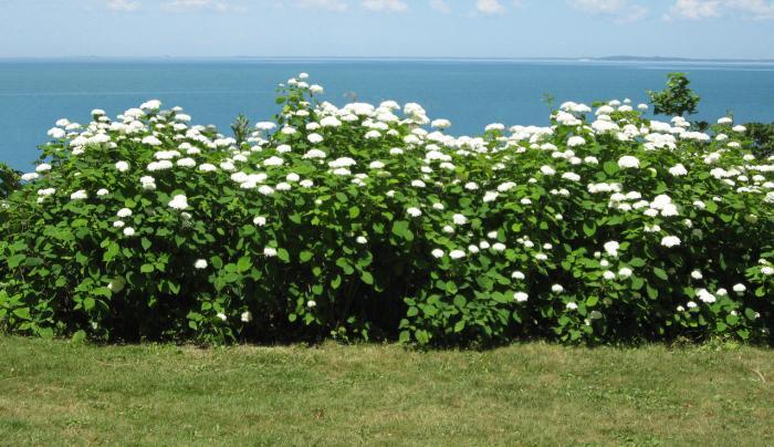 Graycliff Flowering Shrubs with Lake
