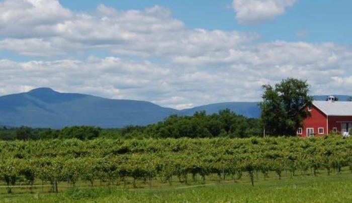 Clermont Vineyard and Winery