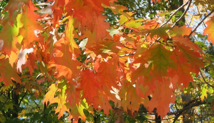 Graycliff Autumn Leaves
