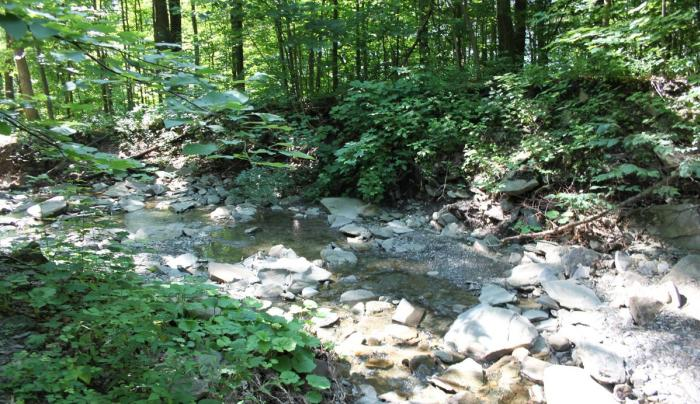 A brook at Hi-Tor