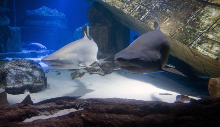 Long Island Aquarium & Exhibition Center in Riverhead
