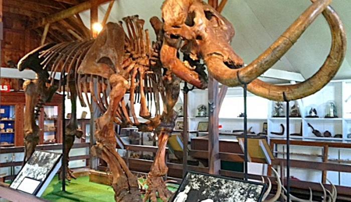 Museum Village Mastodon