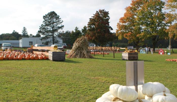 Various kinds of pumpkins at the Pick'n Patch