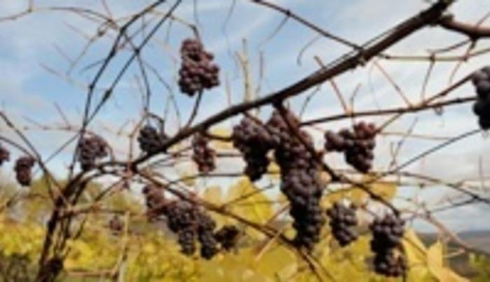 Seneca Lake Wine