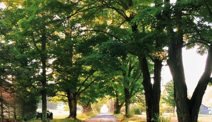 Spruceton Road - Photo by R'el Dade