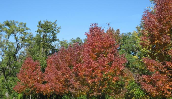 Graycliff Trees Along Path Autumn
