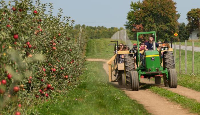 apple orchard hayride
