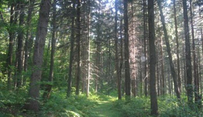 Basswood Pond State Forest, Burlington Flats NY