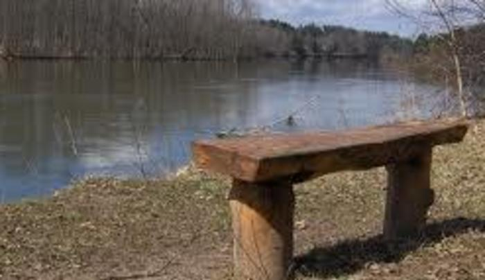 great-bear bench
