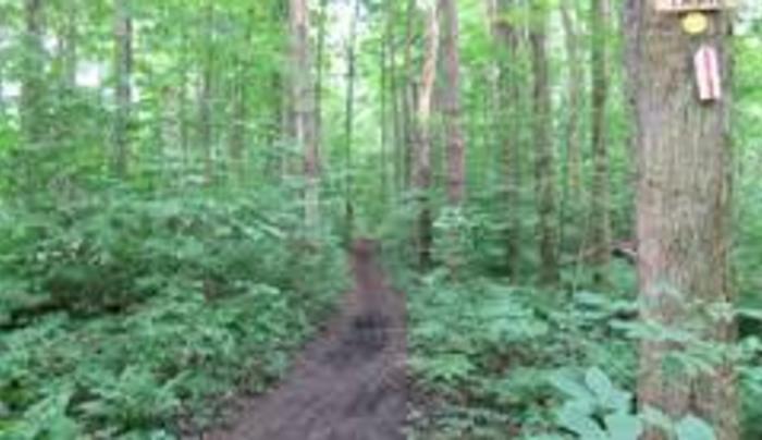 great bear trail